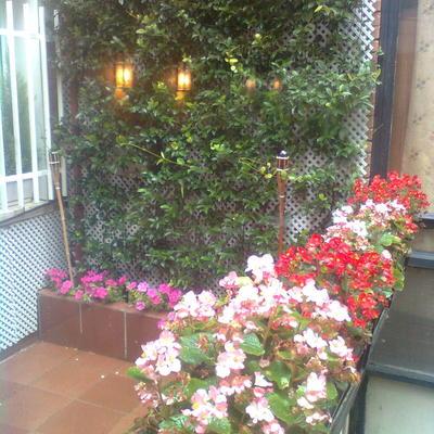 Terraza flor de temporada