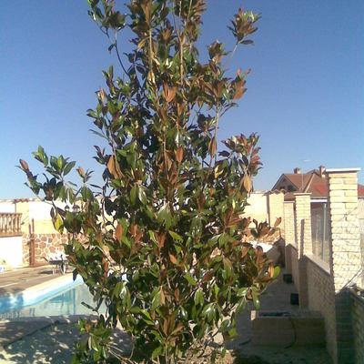 Plantación de elementos vegetales y grandes ejemplares.