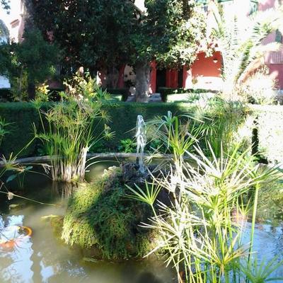Planta acuática en estanque