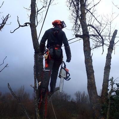 Poda y aseguramiento de árbol, para evitar su rotura por cargas o vientos.