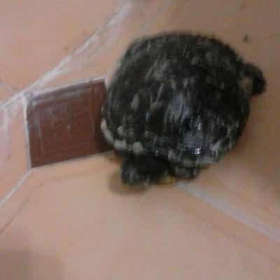 Salvando a una tortuga