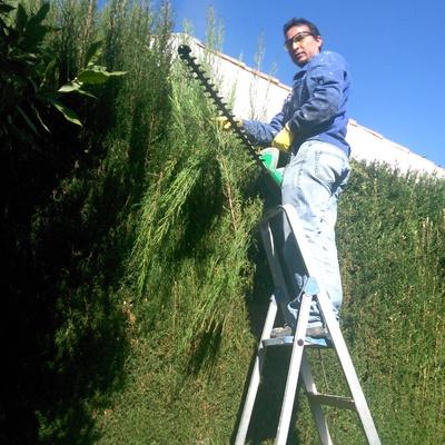 Jardineria poda de setos  y limpieza