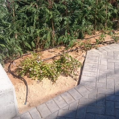 Jardín de planta aromáticas