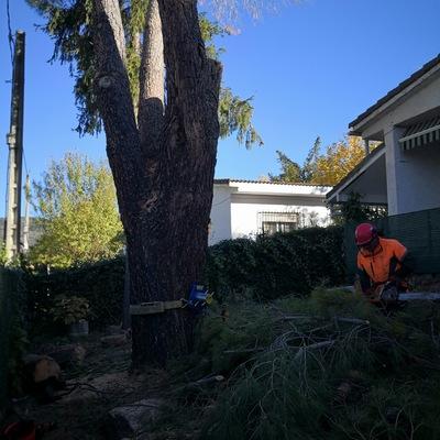 Ay como se puede ver en la foto estamos descolgando las ramas y los troncos para minimizar el riesgo de rotura al caer los troncos y las ramas al suelo con un freno especial definición que frena los troncos y las ramas