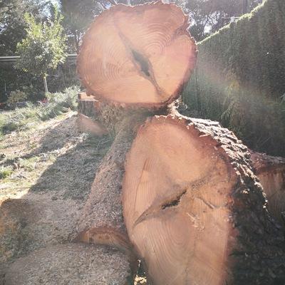 Grietas del árbol ya cortado