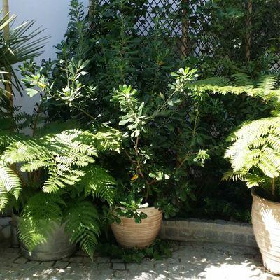 Maceteros con plantas 2