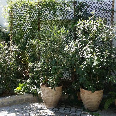 Maceteros con plantas
