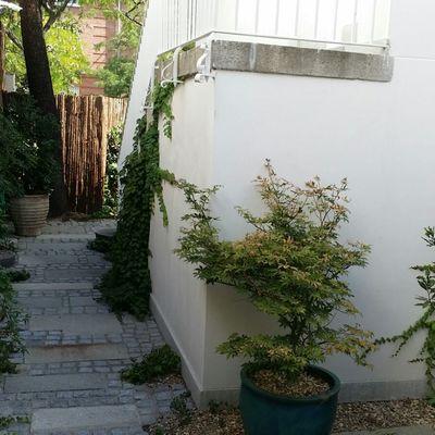 Acondiconamiento de jardín