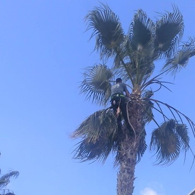 Poda especializada de palmeras en altura