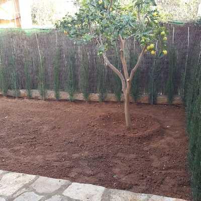 Plantando cipreses
