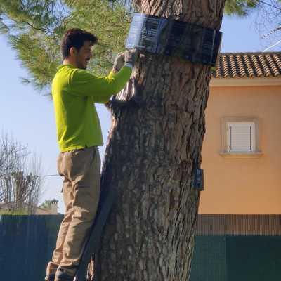 Tratamiento contra la procesionaria del pino