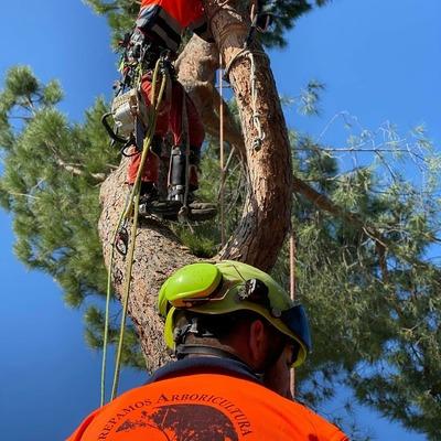 Arboristas especializados en podas y talas