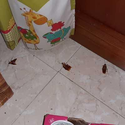 Cucarachas cocina