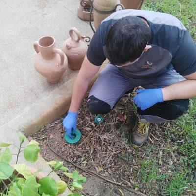 Tratamiento ecológico para el control de termitas