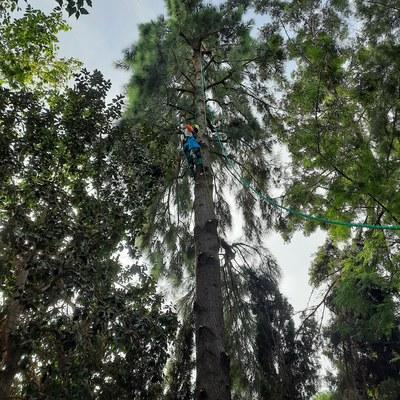 Tala de árboles