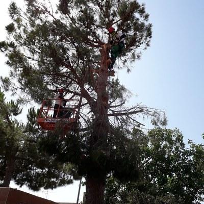 Tala de árboles contacta con nosotros y pide presupuesto sin compromiso 626254890
