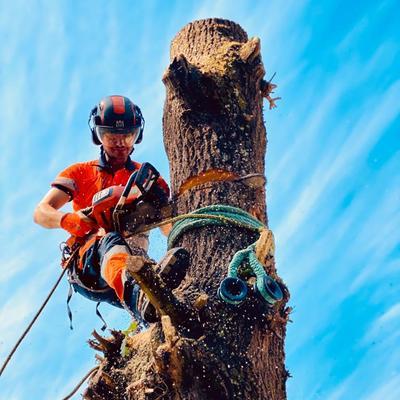 Apeo de tronco por secciones con control de caída