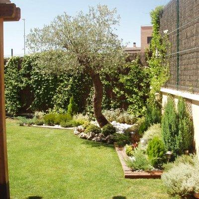 Plantacion de cesped y  olivo, delimitacion de parterres