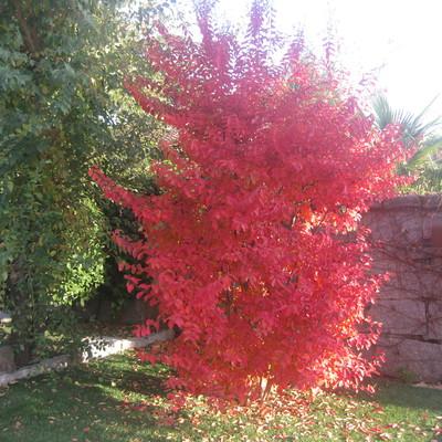 Colores de otoño (Rivas)