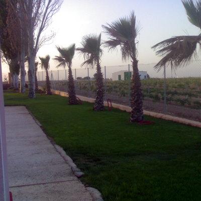 Jardin con palmeras