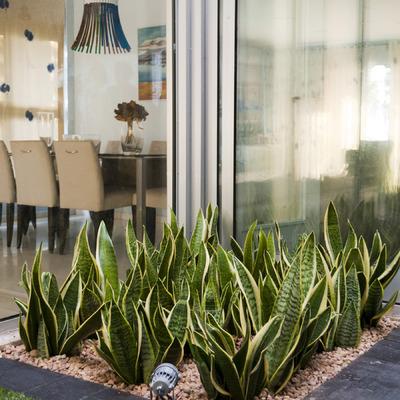 Jardín minimalista en patio interior