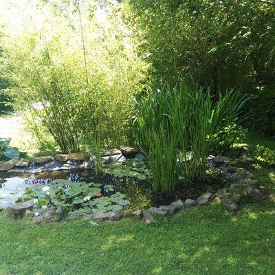Charca en nuestro propio jardín