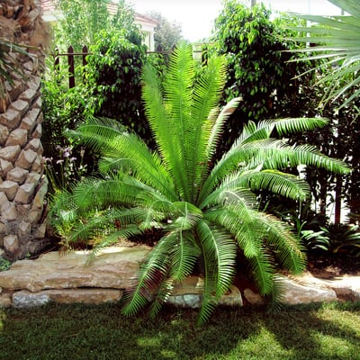 Jardín subtropical en Elche