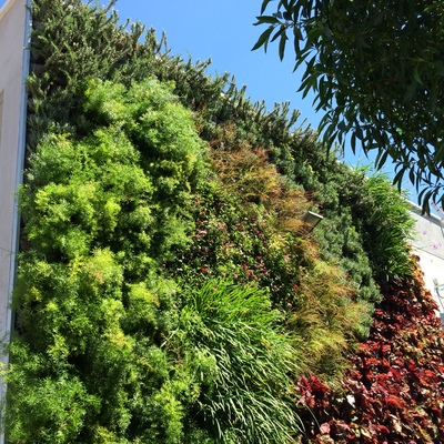 Jardín vertical fachada Colegio Saint Mary
