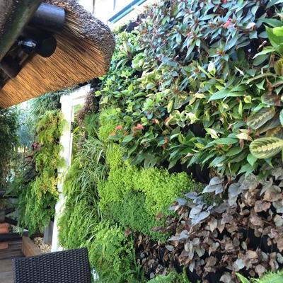 Jardín vertical Showroom
