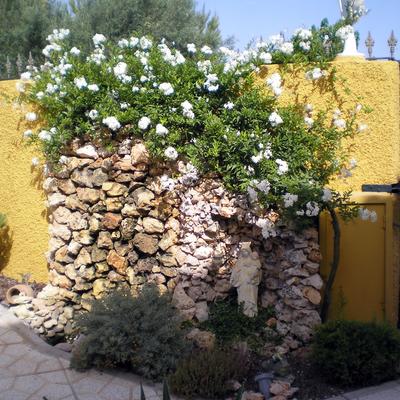 Jardineria.