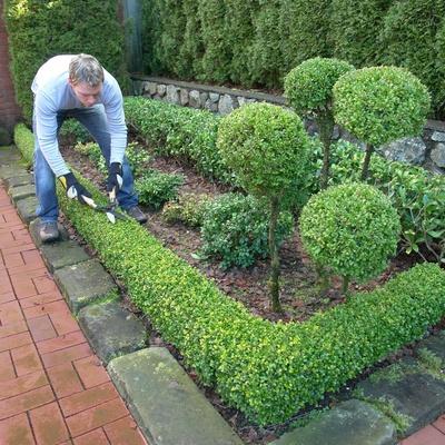 Jardineros a domicilio