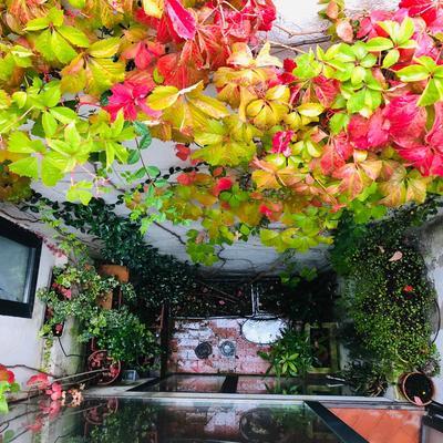 LeAatelier_Paisajismo casa campo-patio en otoño Parra Virgen