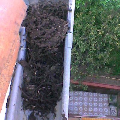 Limpieza y mantenimiento de canales y bajantes