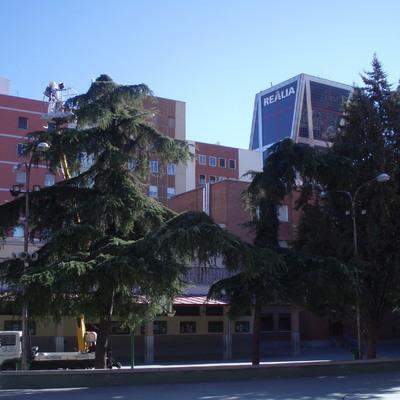 Mantenimiento arbolado colegio Nª Sª del Pilar
