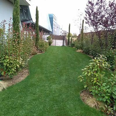 Diseño y ejecución de zona verde