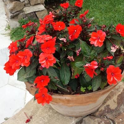 Mantenimiento Jardin flores Marbella