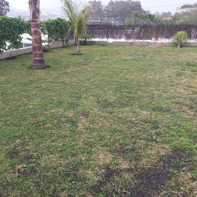 Mantenimiento jardin San Pedro de Alcantara