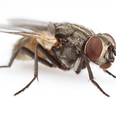 Insectos voladores.