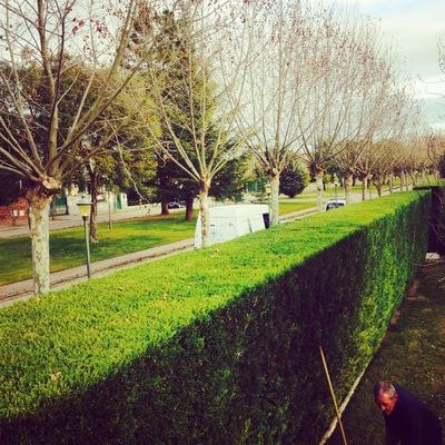 Poda en Valladolid