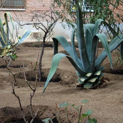 Nuestros jardines presentan un aspecto minuciosamente cuidado, como se puede observar en la fotografía, porque para nosotros el cliente es lo primero.