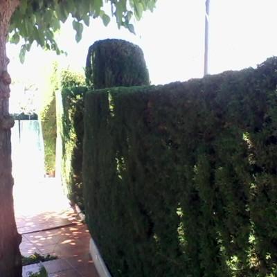 PODAR   ARBOLES
