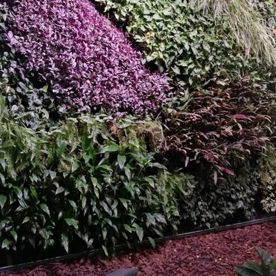 Instalación Jardín Vertical natural