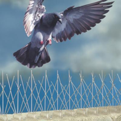 Varillas antiposado de palomas