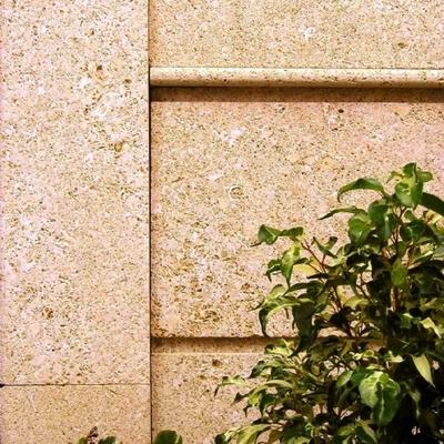 piedra fósil