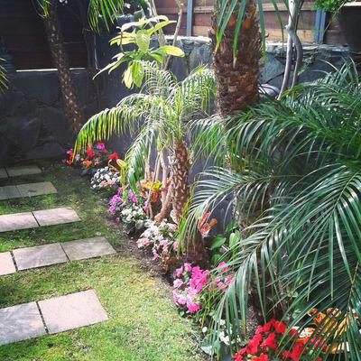 Plantación y mantenimiento