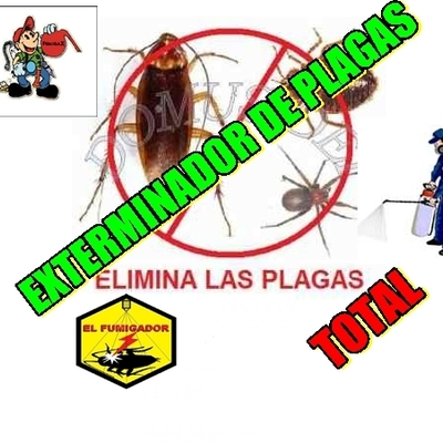 plagas comunes