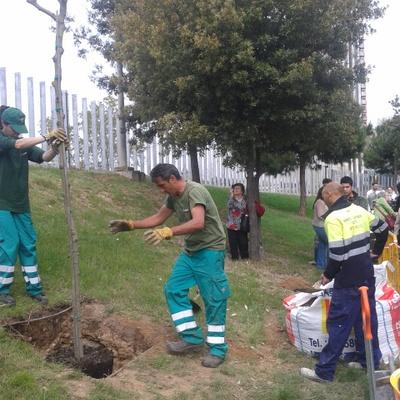 Plantación de árbol el dia del Párkinson, en el hospital.