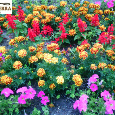 Plantaciones de flores de temporada