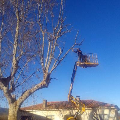 Poda d'arbres exemplars