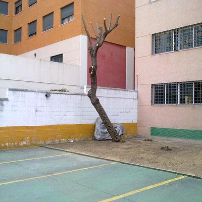 PODA DE HACARANDA
